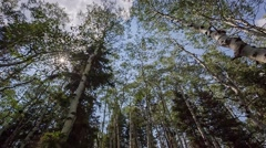 Walking through forest looking up aspen and pine trees Stock Footage