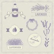 Lavender - stock illustration