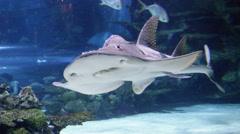 Shark swimming underwater marine life Stock Footage