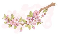 Sakura cherry branch Stock Illustration