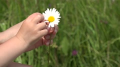Mother hand and baby hand pulling up daisy petals, love me love me not 4K Stock Footage