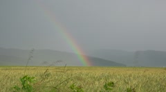 Colored rainbow over wheat plain, mountain village Stock Footage