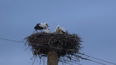 Stork coming back  in the nest to family Stock Footage