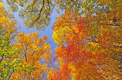 Falls colors in  the forest canopy Stock Photos