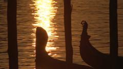 Slow motion bobbing Venice gondolas at dawn Stock Footage