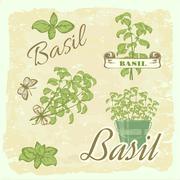 Stock Illustration of Basil, herb