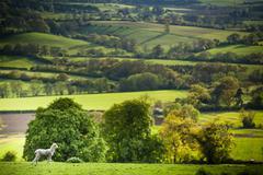Winchcombe, The Cotswolds, Gloucestershire, England, United Kingdom Stock Photos