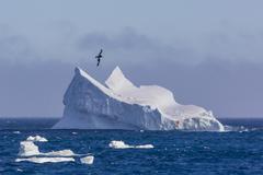 South Orkney Islands, Antarctica, Polar Regions Stock Photos