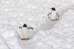 Antarctica, Polar Regions Stock Photos