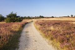 Wilseder Berg, nature reserve, Lower Saxony, Germany Stock Photos