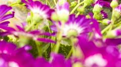 Beautiful Flowers on selling Stock Footage