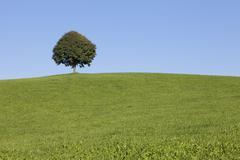 Single tree on a hill, Allgau, Swabia, Baden Wurttemberg, Germany, Europe - stock photo