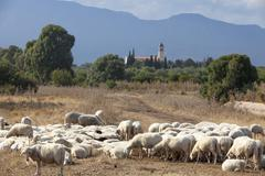 Flock of sheep near Pula, Cagliari Province, Sardinia, Italy, Mediterranean Stock Photos