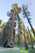 General grant sequoia tree, kings canyon national park Stock Photos