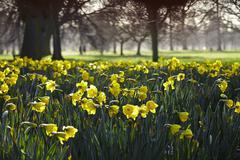 Hyde Park, London, England, United Kingdom, Europe Stock Photos