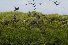 Antigua and Barbuda, Leeward Islands, West Indies, Caribbean, Central America Stock Photos
