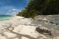 Sea turtle, Anse Source d'Argent beach, La Digue, Seychelles, Indian Ocean - stock photo