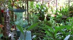 Vietnam Phú Mỹ district villages 039 plants in a veranda Stock Footage