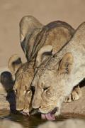 Encompassing the former Kalahari Gemsbok National Park, South Africa Stock Photos