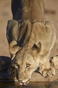 encompassing the former Kalahari Gemsbok National Park, South Africa - stock photo