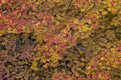 Mount Hood National Forest, Oregon, USA Stock Photos