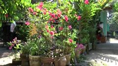Vietnam Phú Mỹ district villages 038 tub plants in a garden Stock Footage