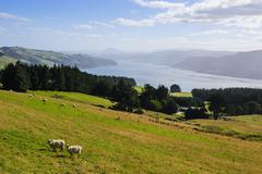 View over the Otago Peninsula, Otago, South Island, New Zealand, Pacific Stock Photos