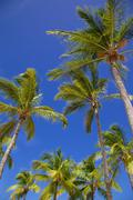 Long Bay, Antigua, Leeward Islands, West Indies, Caribbean, Central America Stock Photos
