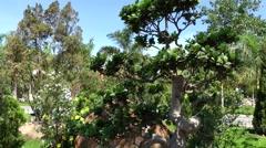 Vietnam Phú Mỹ district villages 055 garden of monastery with bonsai tree Stock Footage