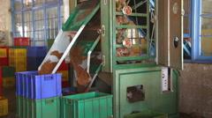 Machine working and producing tea in a tea factory in Nuwara Eliya. Stock Footage