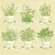 herbs in pot - stock illustration