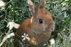 cute rabbit in the wilde - stock photo