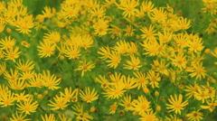 Wild field flowers on the wind Stock Footage