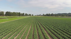 Flying above Agriculture field. Plantation.  Stock Footage