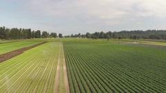 Plantation field aerial shot Stock Footage