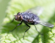 Fly in nature. macro Stock Photos