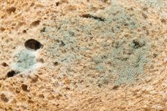 mold on bread. macro - stock photo