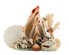seashell in shellfish - stock photo