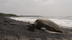 Seaturtle WS Stock Footage