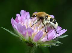 Bug on a flower Stock Photos