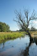 Stream and tree - stock photo