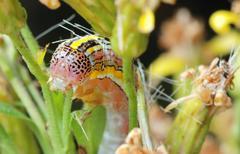 Striped caterpillar Stock Photos