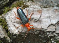 Longicorn beetle on the bark of a tree - stock photo