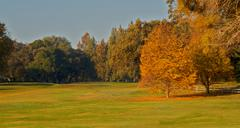 golf course  greens two gold leaf trees - stock photo