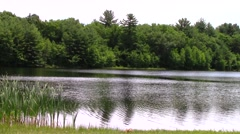 Pond, water moving, breeze Stock Footage