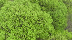 Flight over the wood with green krone    .Aerial  top view Stock Footage