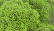 Stock Video Footage of Flight over the wood with green krone    .Aerial  top view