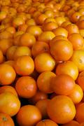 Pile of navel oranges Stock Photos