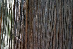 Stock Photo of cedar bark