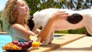 Stock Video Footage of Cute Dog Kissing a Young Cheerful Woman at Summer Poolside.